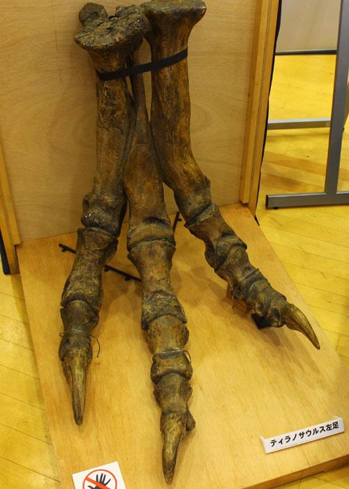 ティラノ脚