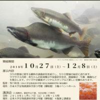 サケ 繁殖の秘密に迫る