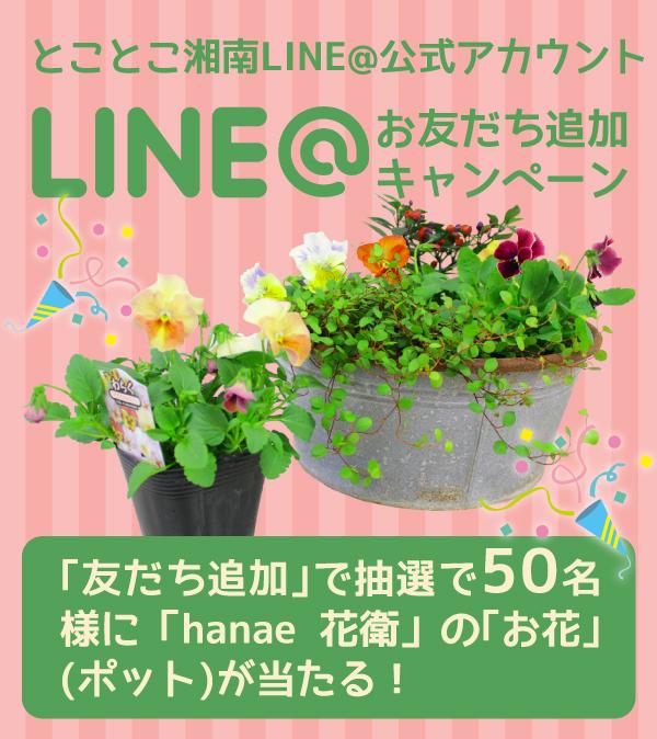 LINE@お友だち追加