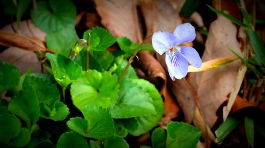 Violet_01[1]