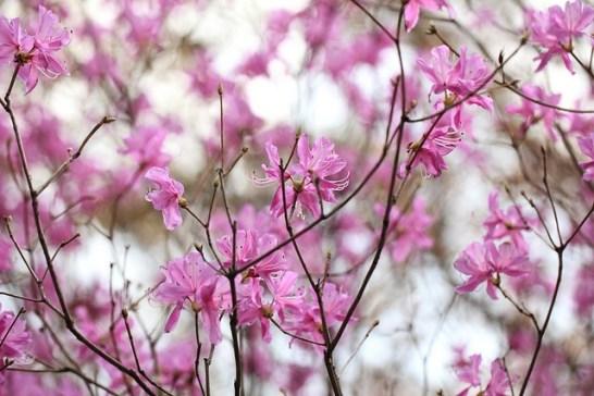 誕生 5 月 22 花 日 5月23日の誕生花(誕生日の花言葉)今日は何の日
