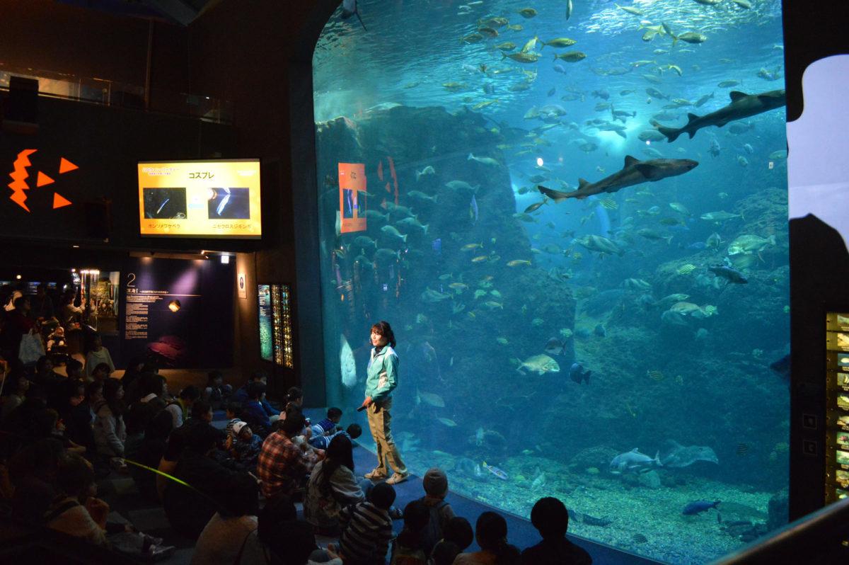 ヒカリノエノスイ~美しい水族館~ えのすいワンダーアクアリウム2019 第三幕-ハロウィンまつり-