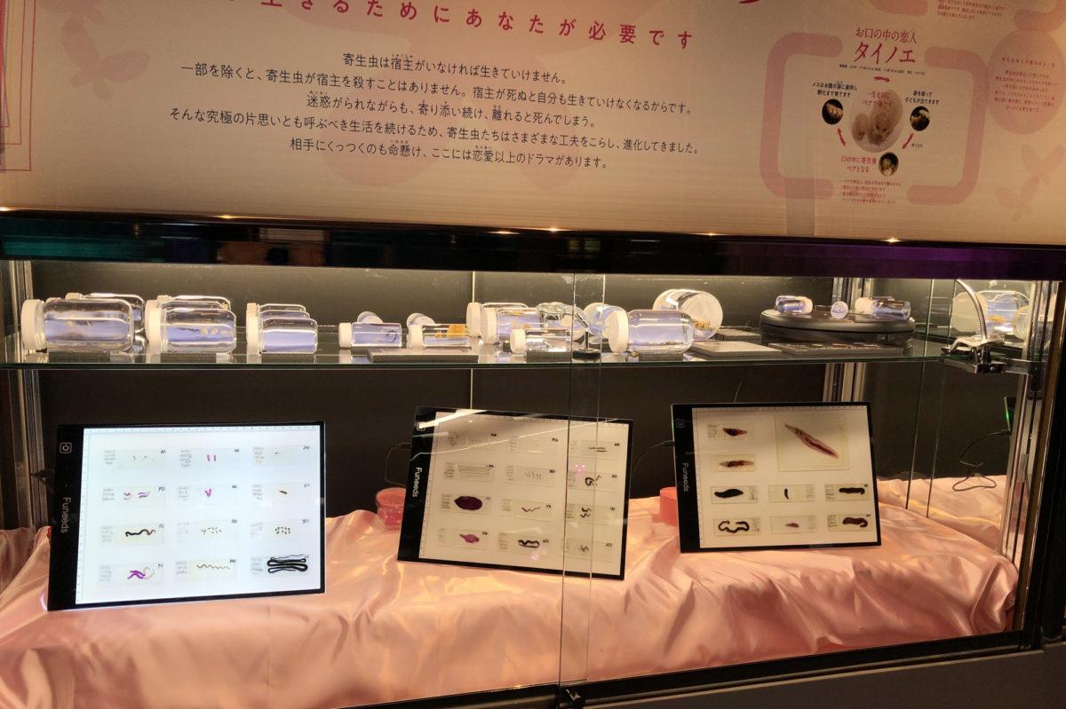 """恋する""""えのすい"""" 新江ノ島水族館"""