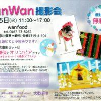 wanwan撮影会