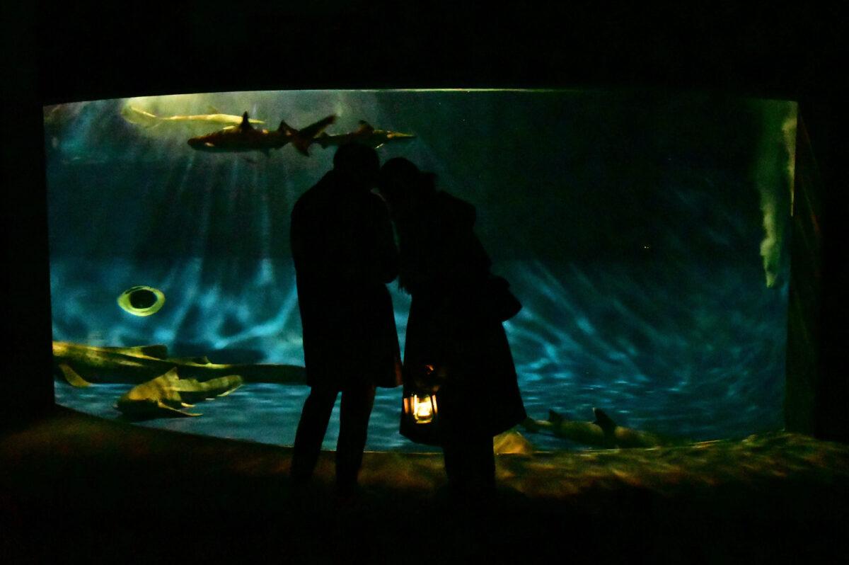 春のイベントのご案内♪【新江ノ島水族館】