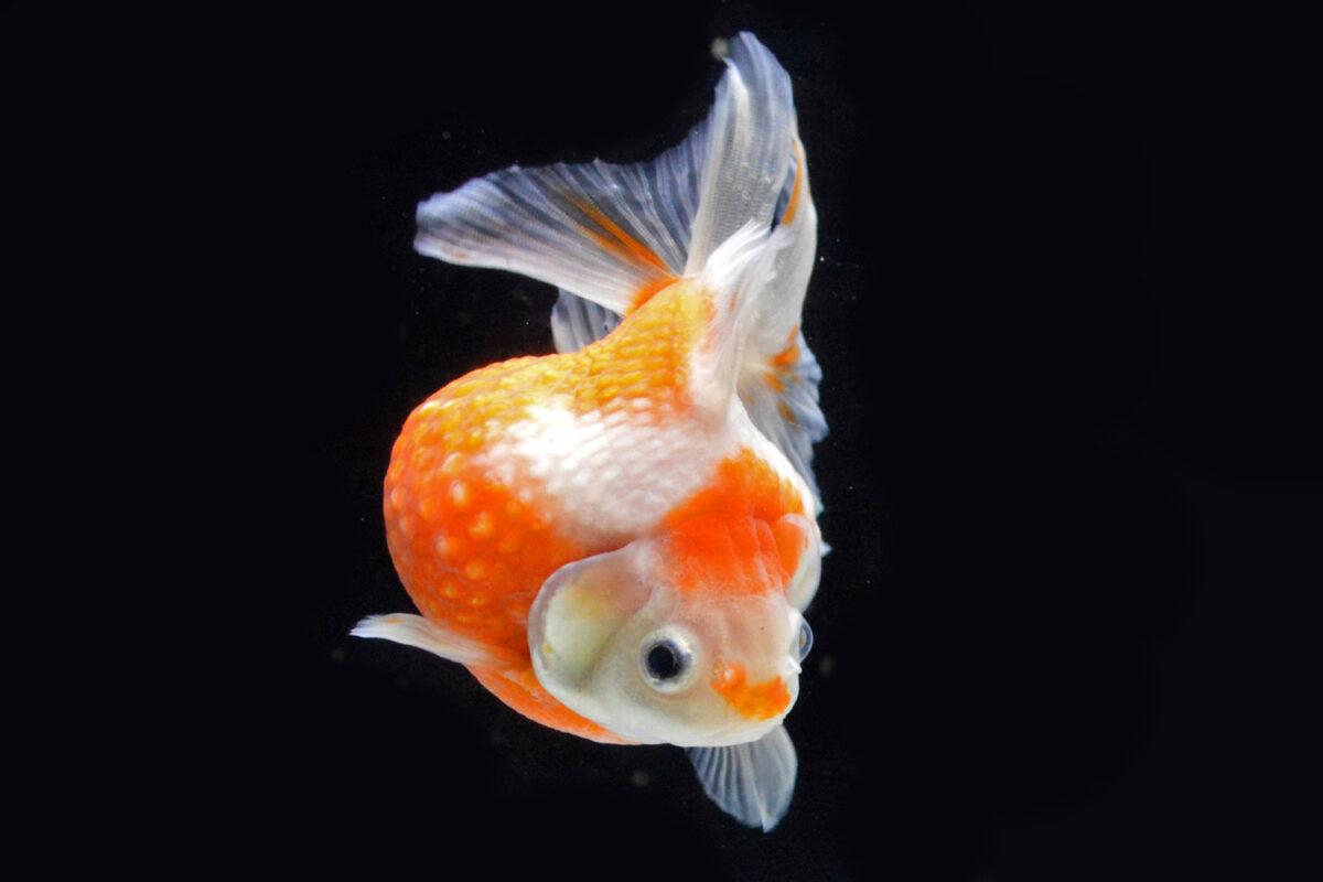 紫陽花と水の生き物たちの美しい世界「水面に咲く蒼。」【新江ノ島水族館】